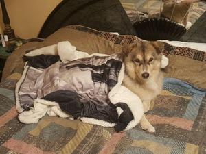Richi vilar ut, nybadad och under en filt, efter att fått hjälp av räddningstjänsten upp ur den iskalla Måsnaren.