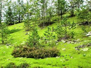 En utav bilderna med den gröna mossan.