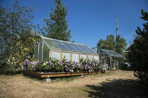 Allt runt växthuset är bara ett överskott från alla de plantor hon planterat.