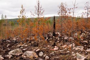 På andra sidan dalen, i riktning mot Olingdal, är träden fortfarande gröna.