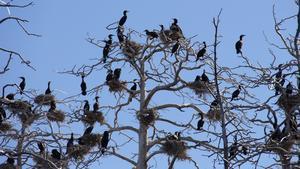 Ornitologerna har besökt öarna flera gånger under året och räknat bon.