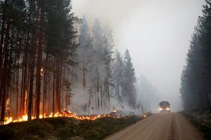 Den här sommaren har ännu inte medfört några större skogsbränder, men det är bra att veta vad som gäller om olyckan är framme. Foto: TT