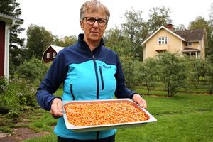 Kristina Lillpers med en liten del av årets havtornsskörd.
