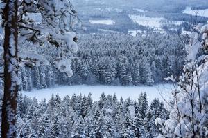 Från toppen av Varvsberget kan man åt sydväst se ner mot Hörnsjöns tätortsnära naturreservat, med sin snötyngda tall- och granskog.