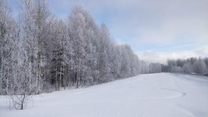 Härligt vackra frostklädda träd så långt ögat når.