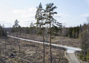 Skog och kalhygge i en skog i norra Uppland.Foto: Fredrik Sandberg / TT /