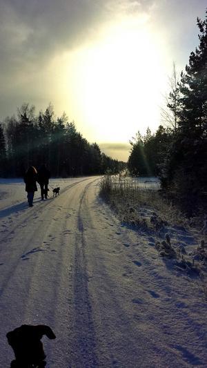 Hundpromenad i vackert vinterväder utanför Skultuna.Foto: Kim Granström
