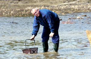Seppo Penttinen söker efter likfynd vid Främby udde i Falun, i maj 2001.Foto Kjell Jansson