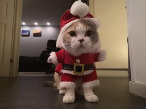 Här är Nova, riktigt taggad på julen som ni kan se! Bild: Mathias Bergendahl