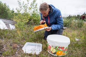 Johanna Maxén spanar in vad hon har håvat upp ur vattnet. Hon höll också en föreläsning om hur de på Skräddarbacksskolan i Borlänge arbetar med att få in de globala målen i sitt årshjul.