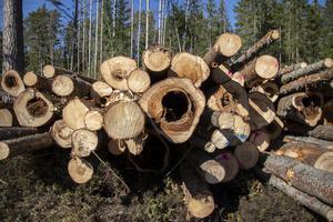 Tätsortsnära skog har avverkats i Hudiksvall och det kritiseras av  Vänsterpartiet