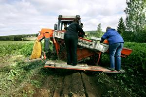 Bönderna i Sverige kan vara en del av lösningen för planeten. Foto: Marie Nirme/Arkiv