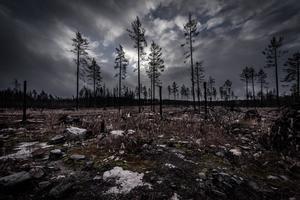 Mer skog måste skyddas. Foto: Anette Seldén