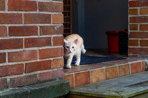 Katten Saffran bor tillsammans med Alexandra i huset i Korskrogen. Han och katten Felix som inte hade lust att vara med i tidningen.