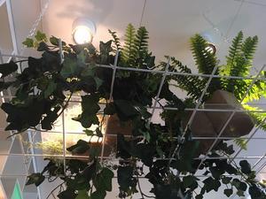 Belysta växter piggar upp.