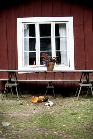 Täpp Lars ordnar också berättarkvällar, man kan hyra in sig och bo i en av stugorna, och vara med och tjärna och ysta.