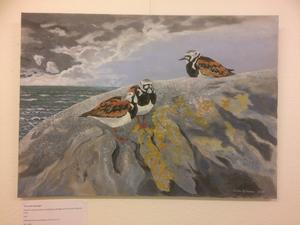Stefan Björklund har bland annat målat roskarl, som är en vadarfågel. Foto: Nina Nilsson