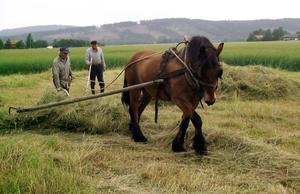 Som ett resultat av artiklarna om Grabbkalles pojkar fick Grabb Gunnar Karlsson, här med brodern Birger och hästen Brun, senare kommunens miljöpris för den småskaliga och arbetskrävande insatsen med att hålla det tätortsnära landskapet öppet.