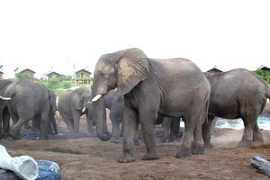 """Foto: Leif Fredriksson – Det häftigaste på safariresorna i Afrika var när jag fick se fyra av """"The big five"""" och många andra djur, säger Leif Fredriksson."""