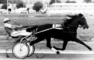 NAExpress Gaxe segrade i 54 av karriärens 93 starter och sprang in totalt 2,6 miljoner kronor. Han tränades och kördes av sin uppfödare Gunnar Axelryd, verksam vid Örebrotravet , Derbyvinnaren Express Gaxe är invald i travets Hall of Fame.