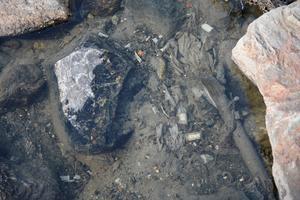 Vid stenkanten ligger det gamla tamponger, avföring och toalettpapper. Stanken sprider sig upp mot skogsbrynet.