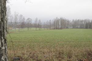 Här är en del av den kommunala marken som ingår i området som är tänkt att byggas bostäder på. Området brukas som jordbruksmark av lantbrukare som arrenderar marken av kommunen sedan två generationer tillbaka.