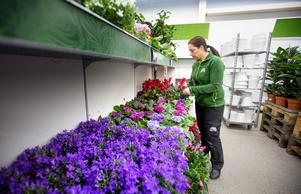 """Sedan Seydi Demir blev butikschef på Blomsterlandet har hennes intresse för växter ökat. """"Mitt hem har blivit en djungel sedan jag började jobba här"""", säger hon."""