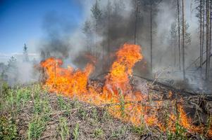 En stor skogsbrand utbröt i Rörbo i Västmanland den 4 juni. Foto: Niklas Hagman