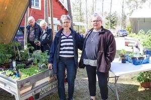 Gunvor Hammar och Anette Engström är grannar både privat och på loppis. Båda är passionerade hobbyodlare och tidigt igång i växthusen.