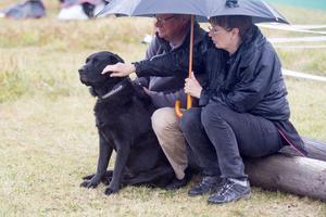 Både människor och djur sökte skydd från regnet.