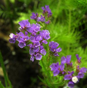 En blomma.