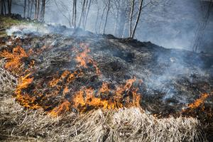 Elden lätt fart i det torra fjolårsgräset såhär års.