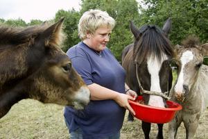 Travaren Dollan tar för sig av Bentes blandning. Dollans föl får också, men hästen till vänster får vara utan.