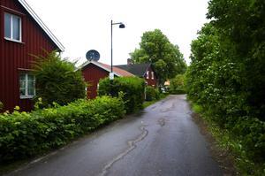 Fällning och plantering. Borlänge energi vill fälla ytterligare ett 40-tal träd i Bergslagsbyn och hoppas kunna göra detta under kommande vinter. Samtidigt ska man också inleda arbetet med att återplantera nya träd istället för redan tidigare fällda. Foto:Johan Larsson