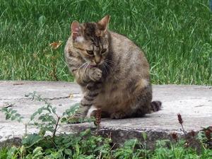 hålla katter borta från tomten