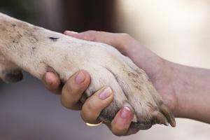Fundera ett extra varv innan du bestämmer dig för att skaffa hund. Ni ska hänga ihop de kommande 10-15 åren.   Foto: Shutterstock.com