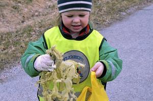 När Marstrandshagens förskola har skräpplockardag fyller Majken Rahlén snabbt sin soppåse med skräp av olika slag.