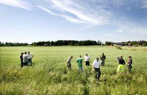Lantbrukarna från Gävleborg och Dalarna var nyfikna på ärtodlingen.