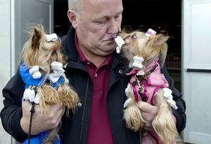Yorkshire terriersyskonen Roy och Skrållan hade matchande outfits.