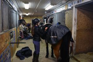 Eftersom Michelle har fem hästar hon använder på olika tävlingar och i olika klasser, så blir det många timmar med vård av hästarna.