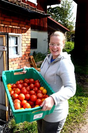 Maria Pellas säger att de första tomaterna är färdiga att skörda i juni.