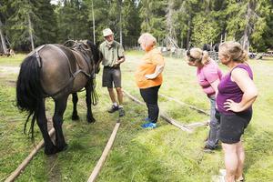 Anders Finnstedt förklarar hur man selar en häst med skacklar.