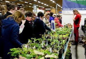 Många köade för att köpa plantor av Larz Danielsson från Hammarstrand.