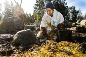 Jon Burman arbetar för att få bort olja med trädgårdsspaden.