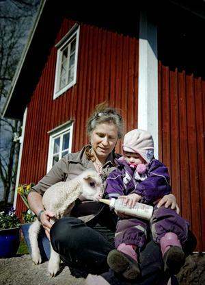 Frontbild: Barnbarnet Tindra vill hjälpa farmor Stina Olovsson att mata fåret som nu fått namnet Pavel.