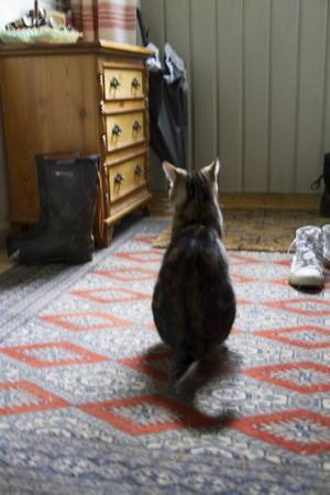 Som en skugga smyger katten omkring i det hemtrevliga huset.