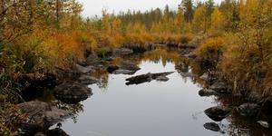 Kärmsjöbäcken. Här finns det mesta – utterbajs, samiska lämningar och stora biologiska värden.