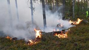 Är det något jag verkligen är rädd för så är det skogsbränder, skriver insändaren, som inte vill se en repris av sommaren 2018.