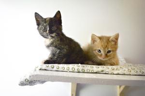 Ekonomiskt går Öbacka djurhem runt med hjälp av donationer, sponsorer och medlemsavgifter. En gång i månaden kan man komma hit på loppis där överskottet går till de katter och hundar som blir omhändertagna av föreningen.