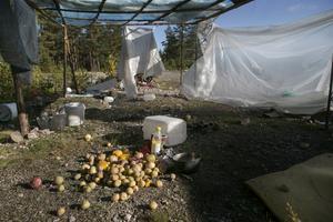 Resterna av potatis, paprikor och lök vittnar om att lägret nyligen varit bebott.